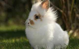 Где живут кролики в домашних условиях