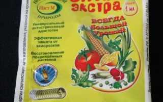 Замачивание семян перца перед посадкой — способы замачивания в эпине, марганцовке, перекиси