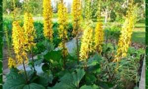 Желтые цветы для посадки в саду (с фото)