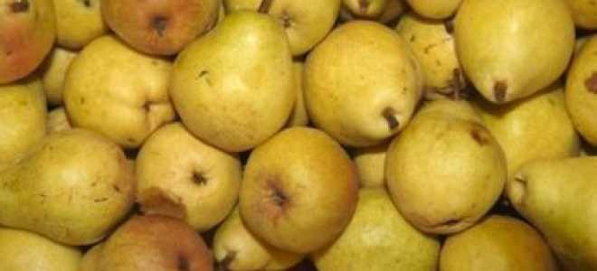 Груша 'Лимонка осенняя' — описание сорта, характеристики