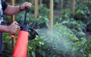 Как бороться с вредителями перца