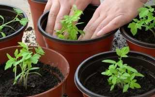 Как сажать помидоры и вырастить богатый урожай – делимся секретами