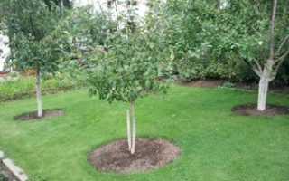 Как правильно сажать садовые деревья