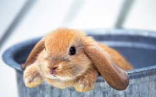 Как правильно приучить кролика к лотку: советы и пошаговая инструкция