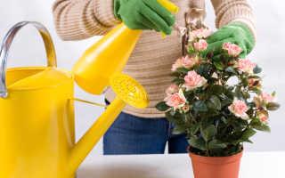 Как вырастить домашние цветы