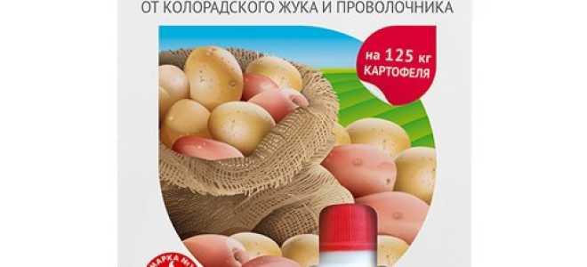 Как бороться с колорадским жуком: инструкция по применению препарата «Табу» для обработки картофеля