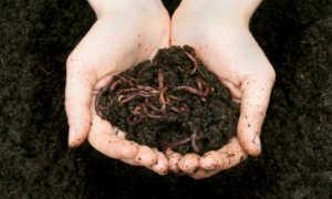 Гумус и биогумус описание жидкого, в гранулах, использование на огороде и в саду