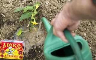 Как правильно поливать огурцы дрожжами: рецепт и пропорции дрожжевой подкормки, как приготовить, дозировка
