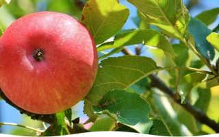 Дома в Саду – интересная и актуальная информация для садоводов и огородников