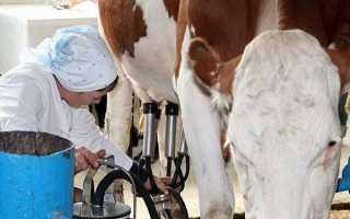 Доильные аппараты для коров: описание, виды, принцип работы