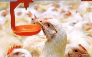 АСД-2 для кур: принцип действия и использование для птиц