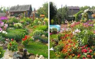 Весенние цветы многолетники фото и названия