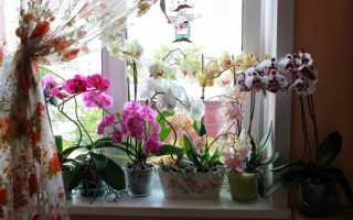 Как правильно пересадить орхидею в домашних условиях: рекомендации специалистов