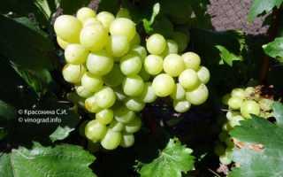 """Виноград """"Валек"""": описание сорта, фото, отзывы"""