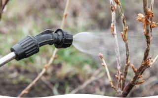 борьба с вредителями » Огород, сад своими руками. Советы начинающим огородникам и садоводам