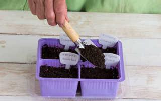 Видео как правильно сажать капусту