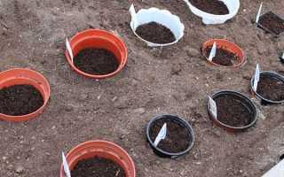 Виды многолетников и однолетников, которые можно сеять под зиму семенами