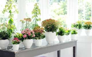 Домашние цветы которые всегда цветут