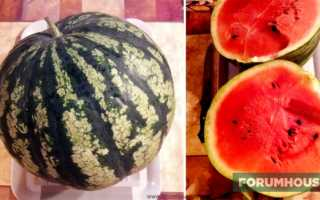 Арбуз: раскрываем все этапы выращивания ягоды