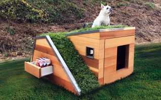 Будка для собак своими руками (55 фото): необычные домики, рубленный из дерева, свой навес, как покрасить