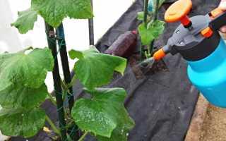 Как правильно использовать мочевину для подкормки огурцов