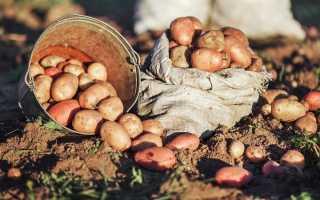 Как правильно вырастить хороший урожай картофеля