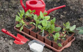 Астры: выращивание из семян популярных видов и лучших сортов