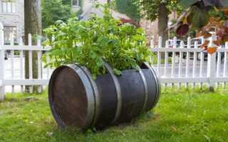 Выращивание картофеля в бочке: преимущества, правила посадки, технология выращивания, отзывы