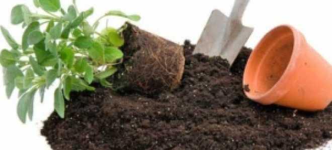 Земля для фикуса: какая почва нужна для растения