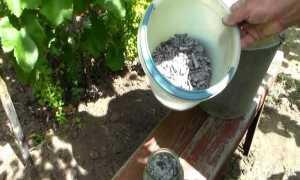 Зола для рассады помидоров и перцев