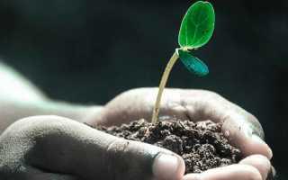 Азотные удобрения — виды, значение, применение