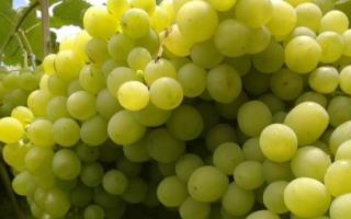 Виноград Алешенькин: описание сорта, фото, посадка и выращивание, уход