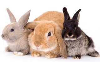 Заболевания у кроликов: характеристика и описание