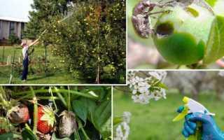 Защищаем яблоню от вредителей – опрыскивание