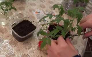 Как вырастить хорошую рассаду