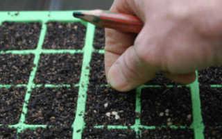 Благоприятные дни для посадки томатов на рассаду в 2020 году