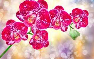 Зола для цветов польза