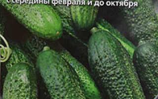 Выращивание огурцов в пятилитровых бутылках: преимущества, подготовка почвы, емкостей, правила посадки, уход на балконе, в теплице