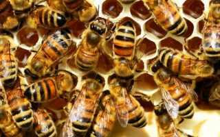 Как избавиться от соседских или диких пчёл?