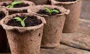 5 причин посадить рассаду в торфяные горшочки