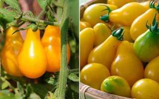 Желтые сорта помидоров с фото и описанием