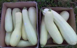 Как вырастить кабачок в теплице