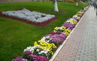 Бордюр из цветов, правила оформления