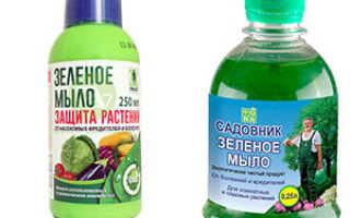 Зеленое мыло: описание профилактического средства от вредителей и инструкция по применению