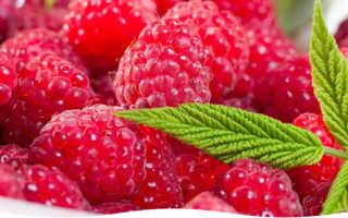 Выращивание малины – советы огородникам и садоводам