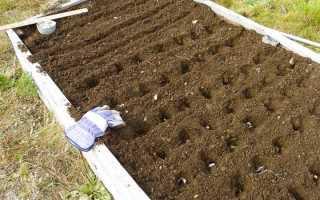 Как подготовить почву осенью для посадки зимнего чеснока?