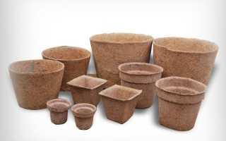 Как подготовить и когда сажать семена дыни на рассаду