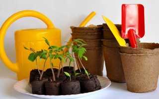 Выращивание рассады помидоров в торфяных таблетках