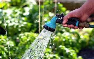 Как поливать огурцы: когда, сколько раз и в какое время лучше