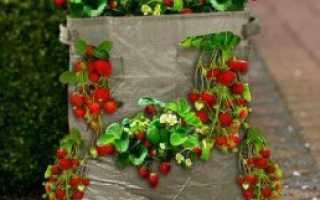 Выращивание клубники в полиэтиленовых мешках,редкость,но зато как интересно!
